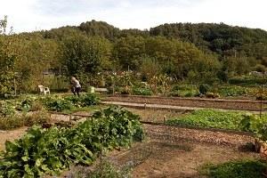 Service Affaires économiques&Tourisme - Les P'tites visites : Jardins communautaires - 16-09-2018